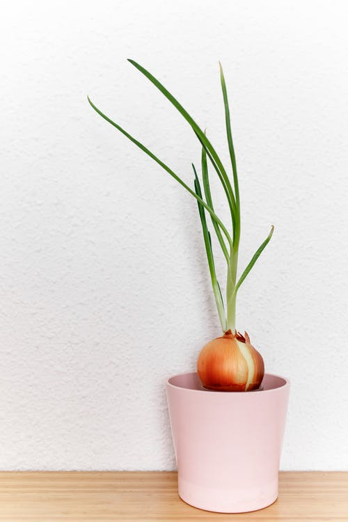 onion in container