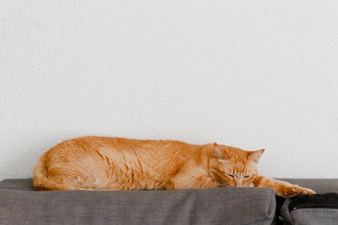 Orange Tabby Cat Lying on Black Textile