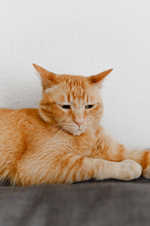 Fotos de stock gratuitas de animal, aterciopelado, bigotes