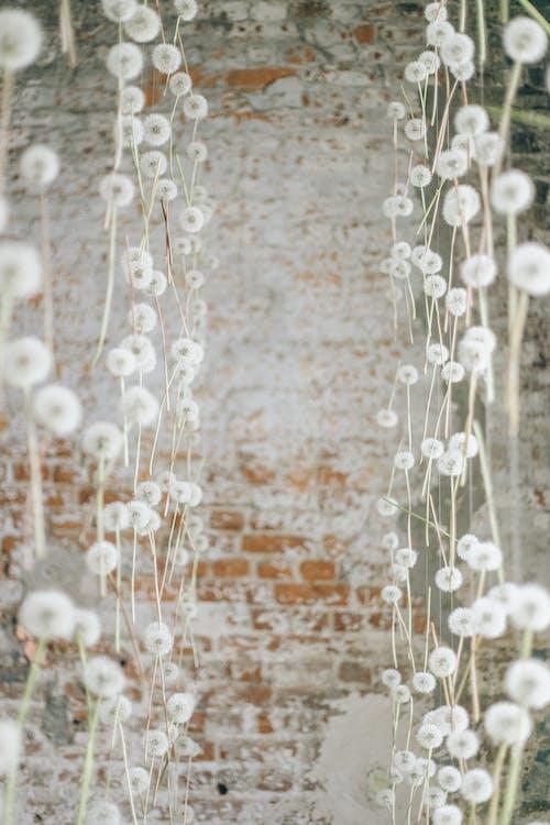 Dandelions in Midair