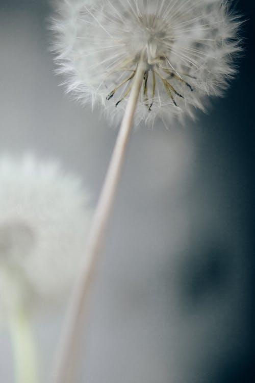 Δωρεάν στοκ φωτογραφιών με florets, γκρο πλαν, κατακόρυφη λήψη