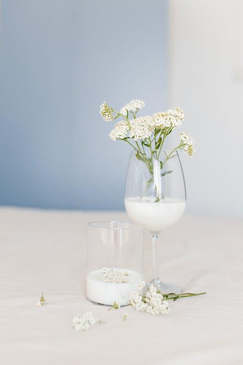 Fotobanka sbezplatnými fotkami na tému biele kvety, citlivosť, elegantný