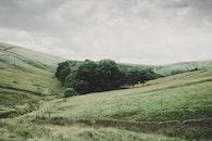 landscape, field, trees