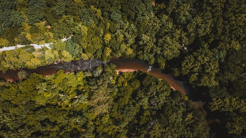Drone view of winding river running among green lush dense woods in tropical area