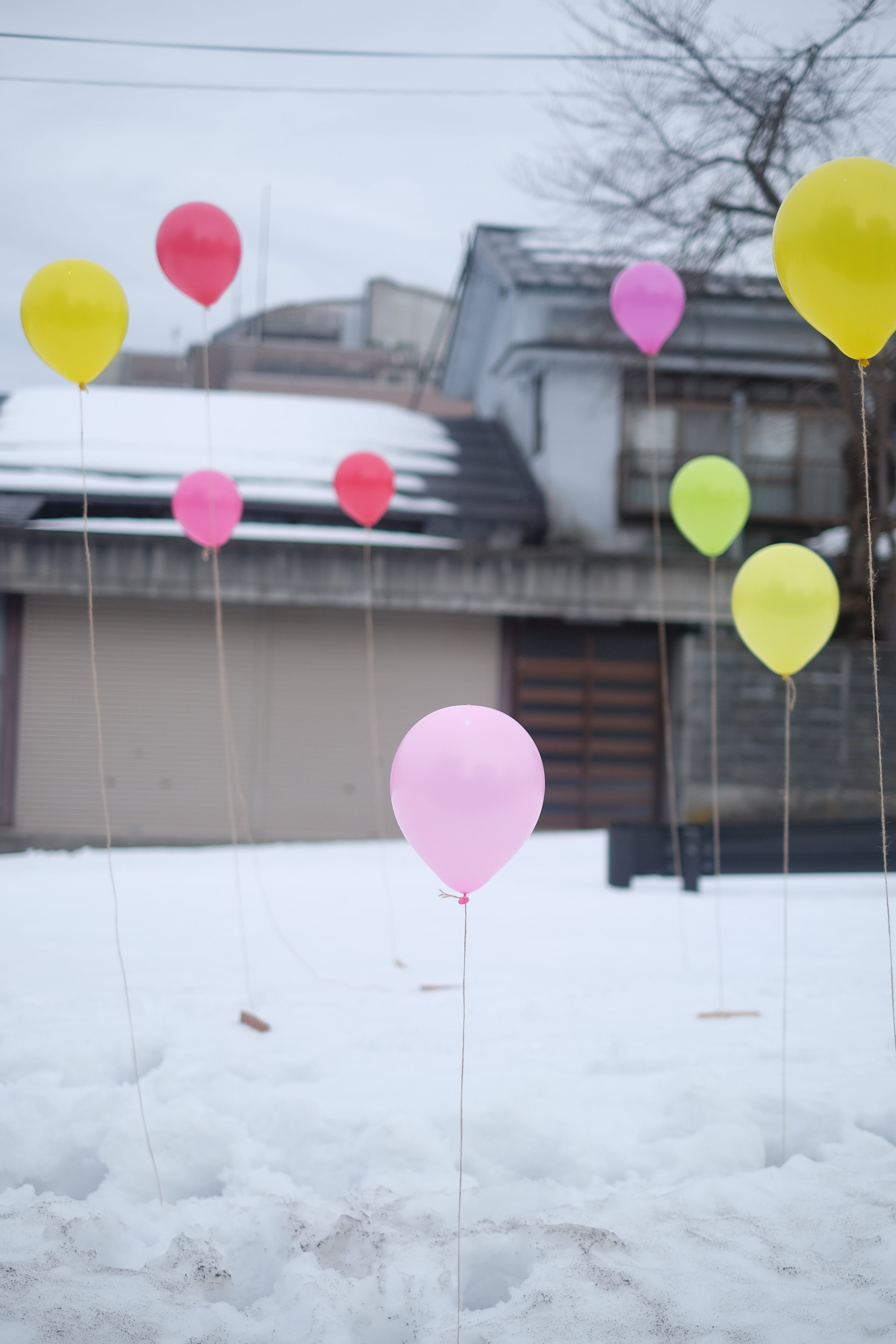 Free stock photo of balloons, colours, contrast, decoration