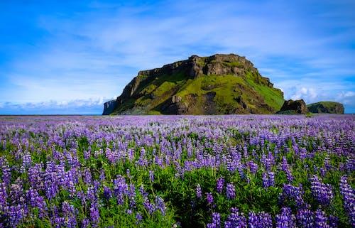 Gratis stockfoto met berg, bloeiend, bloemen, decor