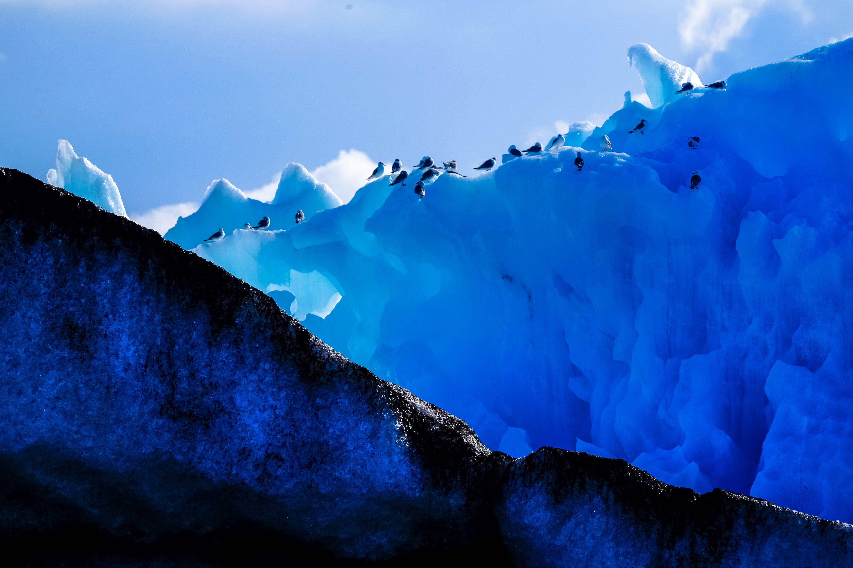 Group of Penguins Walking on Iceberg