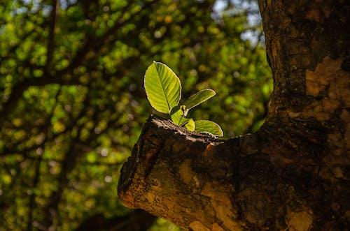Gratis stockfoto met begroeiing, blad, boom, bossen