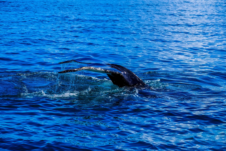 Sea Creature Submerged in Ocean