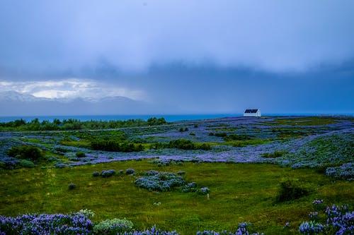 Ingyenes stockfotó ég, fák, felhők, felhős témában