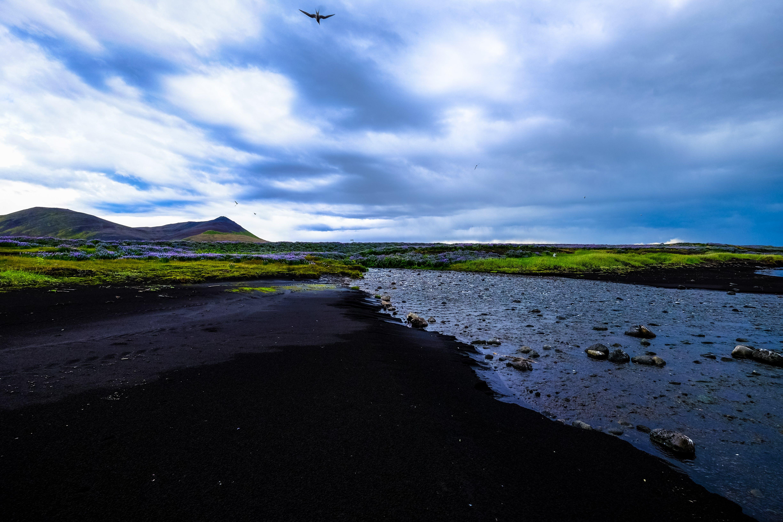 bird, clouds, environment