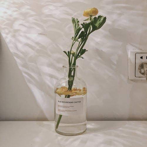 Ảnh lưu trữ miễn phí về hoa đẹp, màu xanh lá, phòng