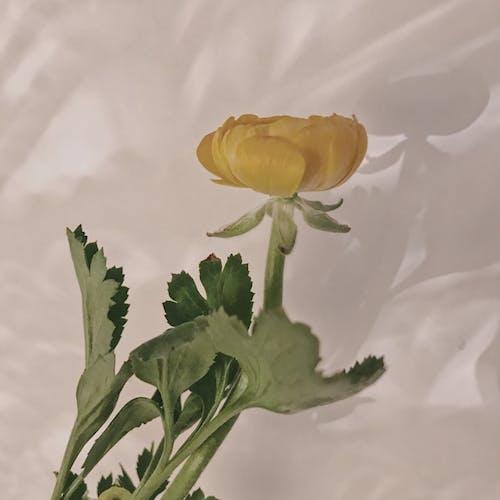 Ảnh lưu trữ miễn phí về hoa, màu vàng, màu xanh lá