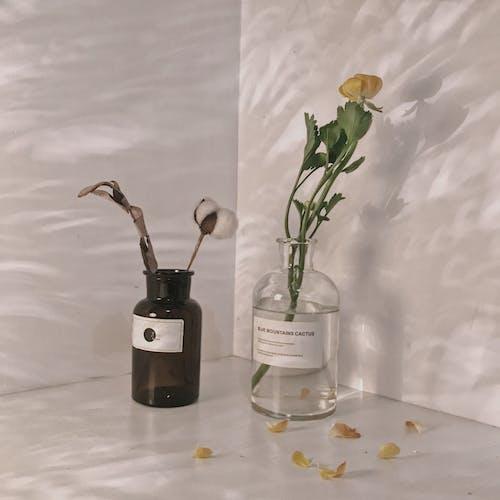 Ảnh lưu trữ miễn phí về màu xanh lá, những bông hoa đẹp