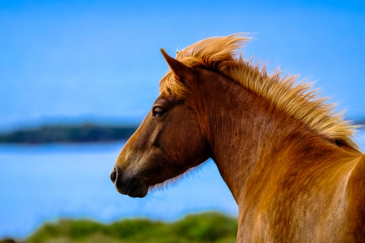 Free stock photo of animal, blur, mane, outdoors