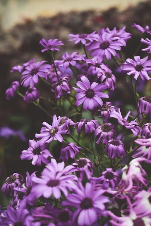 Darmowe zdjęcie z galerii z bukiet kwiatów, kwiaty, kwiaty ogrodowe