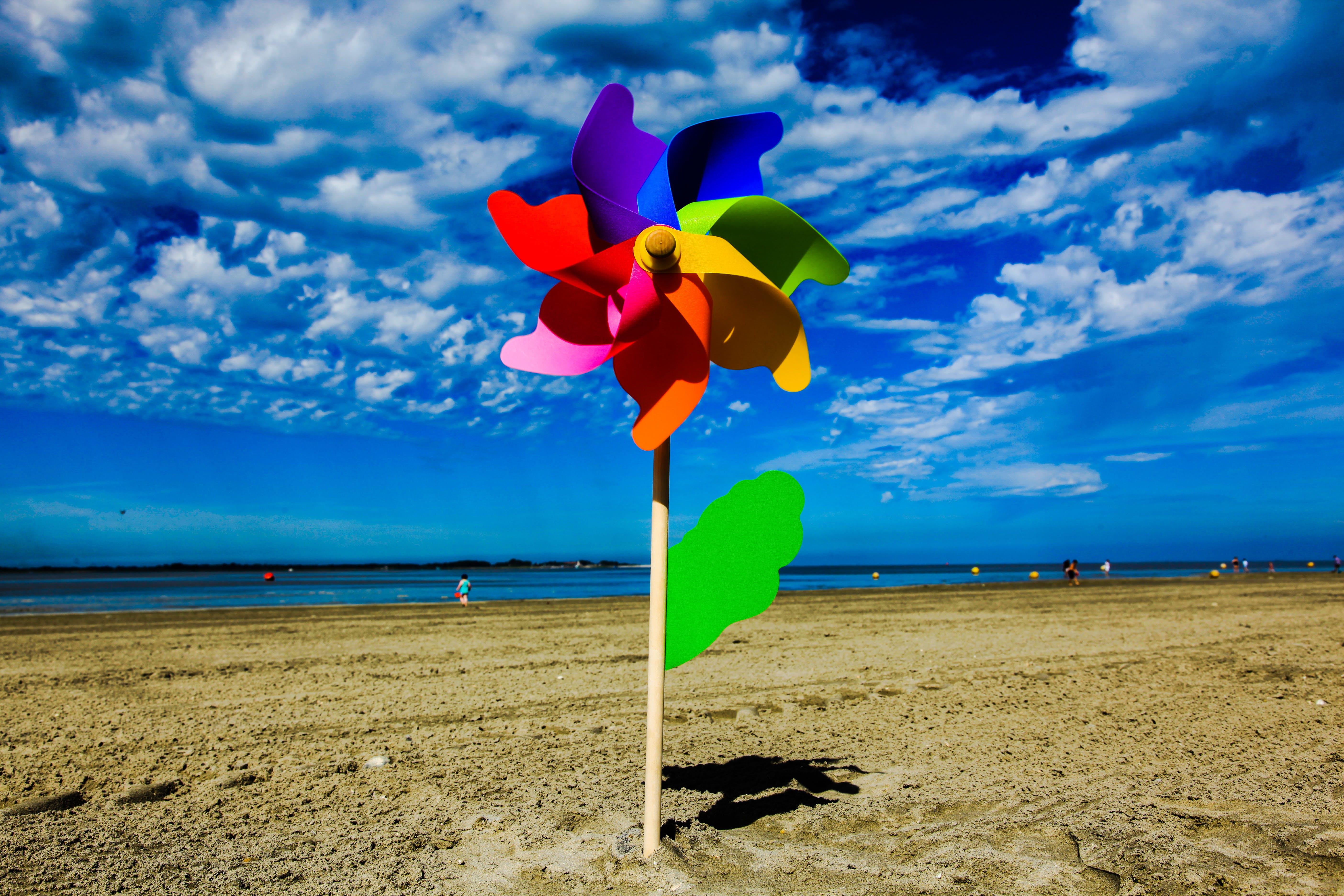 Free stock photo of beach, flower, sand, wind