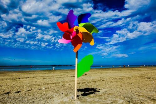 Free stock photo of beach, flower, sand