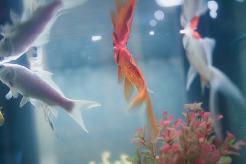 Free stock photo of animal, aquarium, aquatic, blue