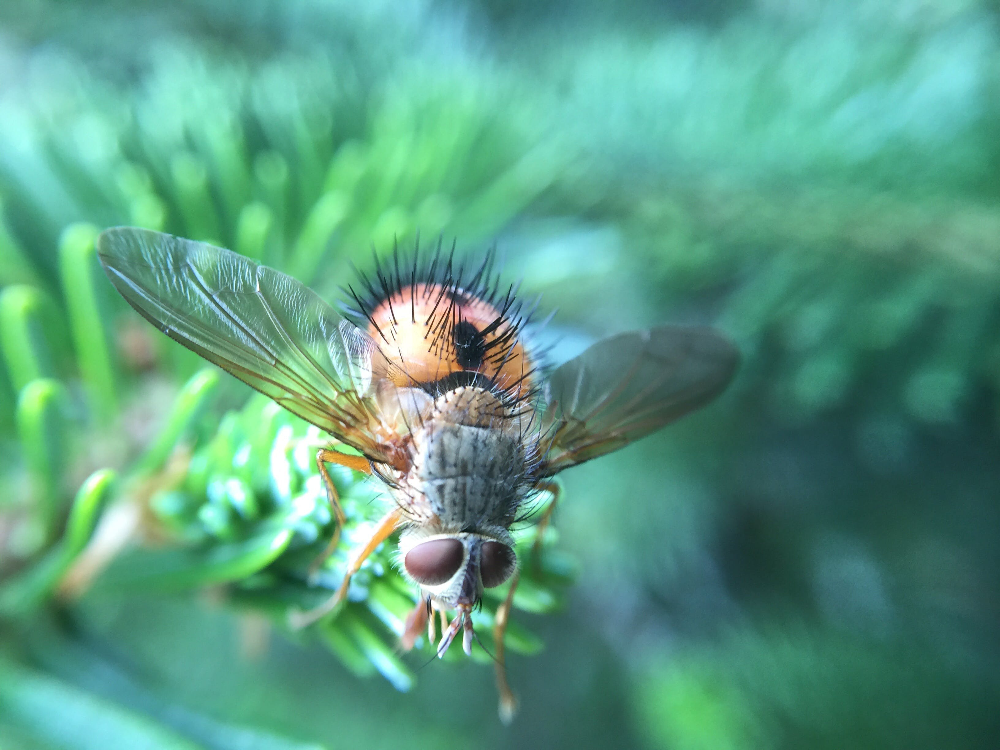 Free stock photo of insect, macro, wings, close-up