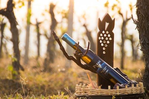 Imagine de stoc gratuită din vină perak, vinarija perak