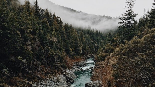 Free stock photo of mountains, water, forest, trees
