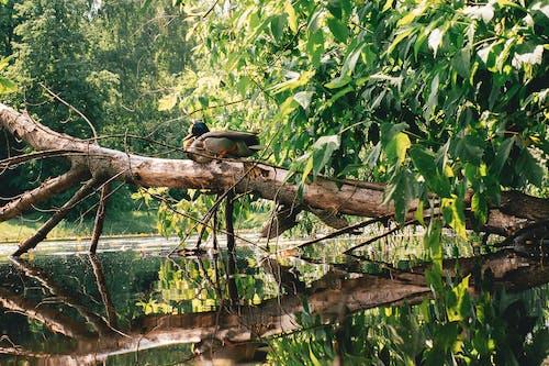 Free stock photo of green, природа