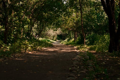 Free stock photo of природа
