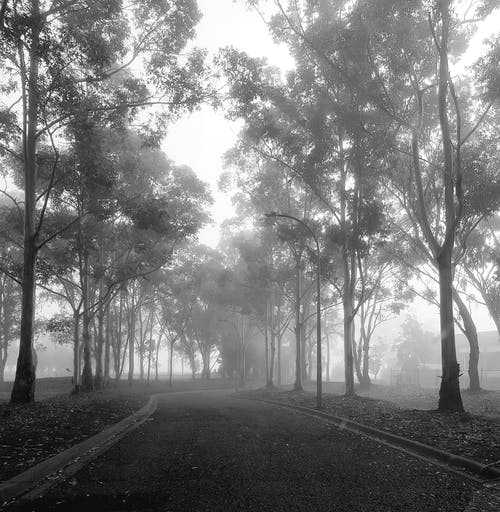 Free stock photo of country road, fog, greyscale, trees