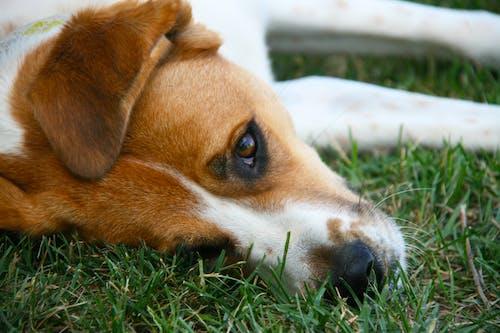 Free stock photo of dog, please