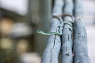 animal, branches, reptile