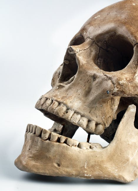 Human skull with white background