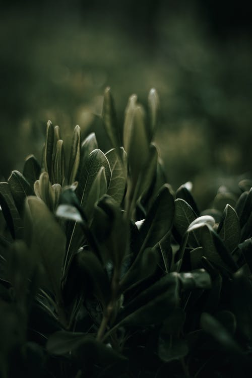 Dark Green Plant in Close Up Photography