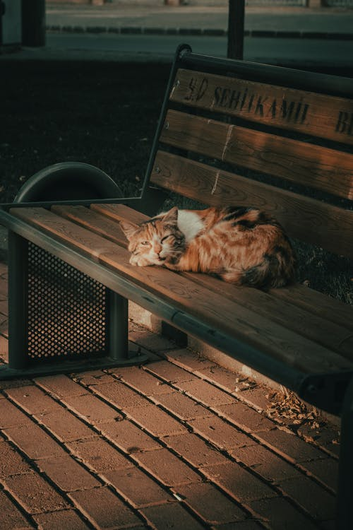 Orange and White Tabby Cat Lying on Brown Wooden Bench