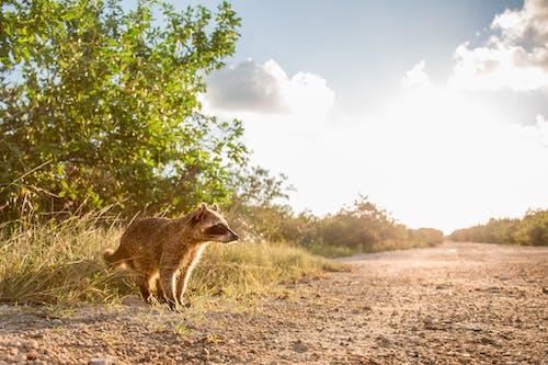 Photo of Raccoon Walking on Ground
