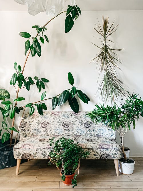 Photo of Houseplants Near Floral Sofa