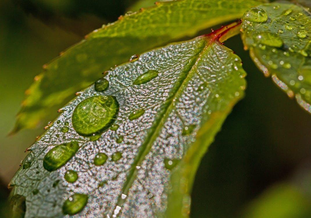 agua, efecto desenfocado, gota de lluvia