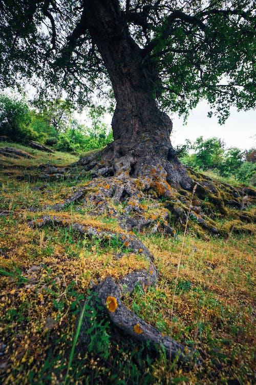 Free stock photo of green, life, solo tree