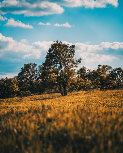 Free stock photo of field, land, landscape, solo tree