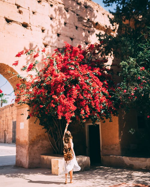 Photo of Woman Standing Under Red Bougainvilleas