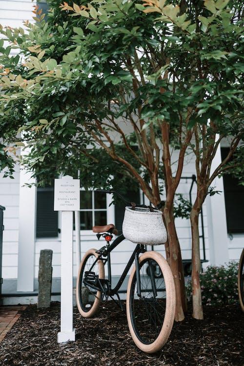 Photos gratuites de arbre, bicyclette, écorce d'arbre