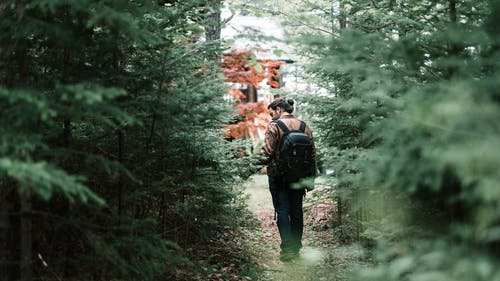 Man Carrying Black Backpack Walking on Forest