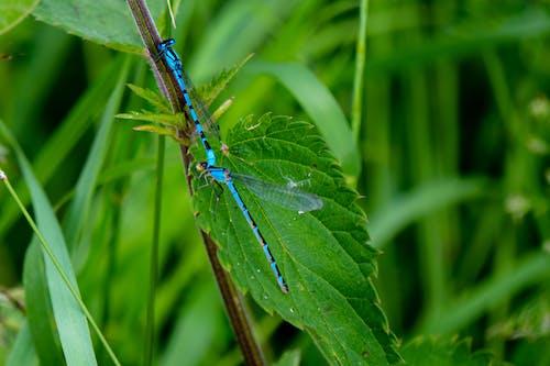 Fotos de stock gratuitas de blau, insekten, insektenfotografie, libellen