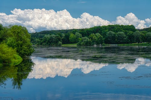 Free stock photo of Bäume, bauschige wolken, beruhigend, blau