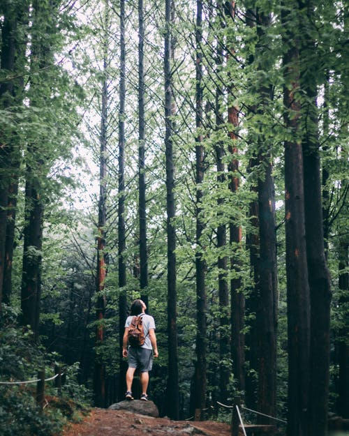 Photo of Person Standing in Middle of Forest