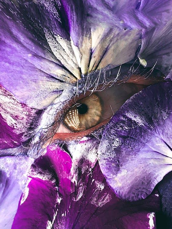 Closeup of purple violet leaves of delicate flower surrounding eye looking at camera
