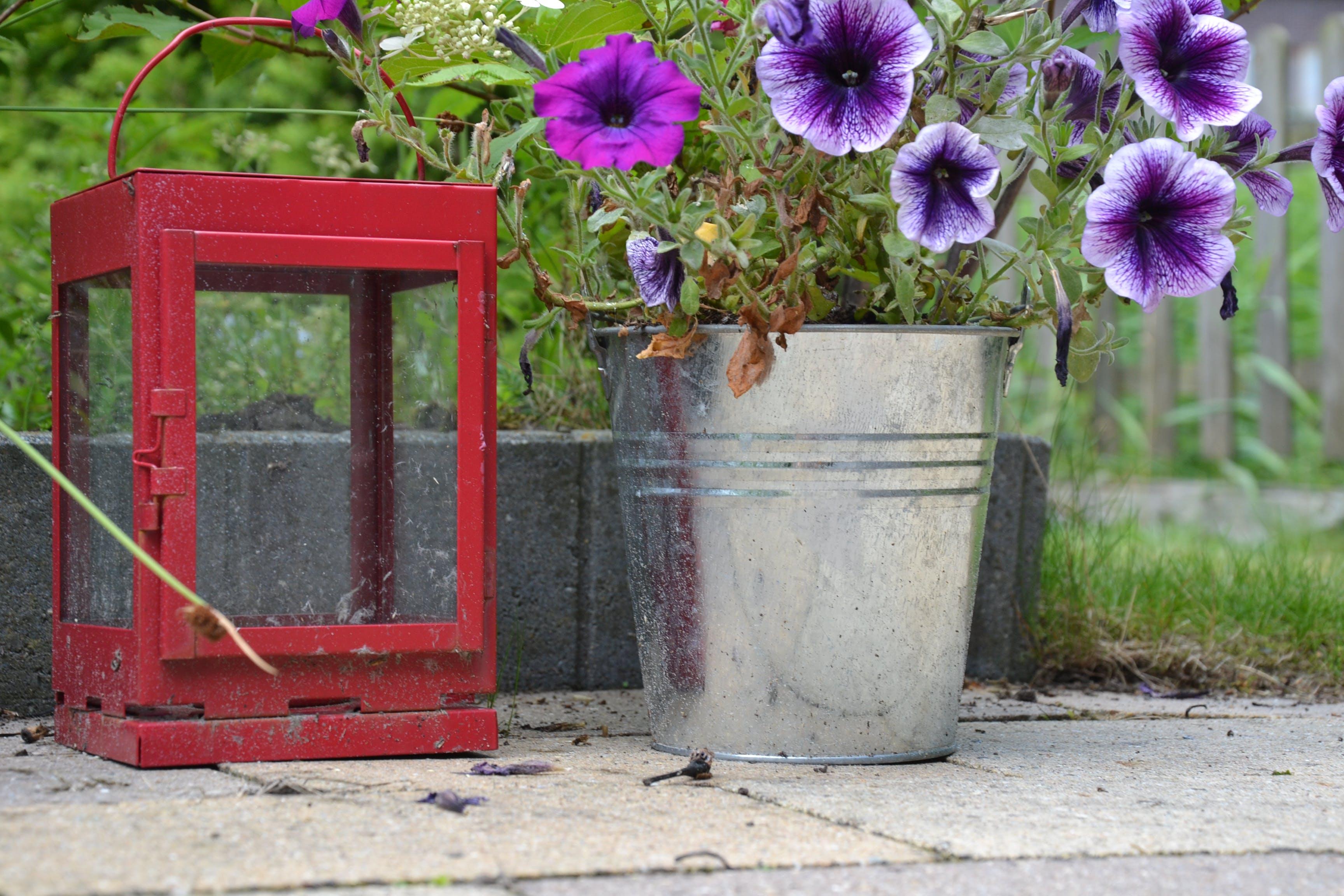 Free stock photo of flower, garden, lantern, red