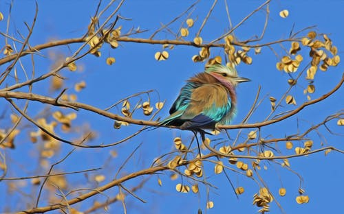 Blue and Brown Bird on Brown Tree Branch Under Blue Sky