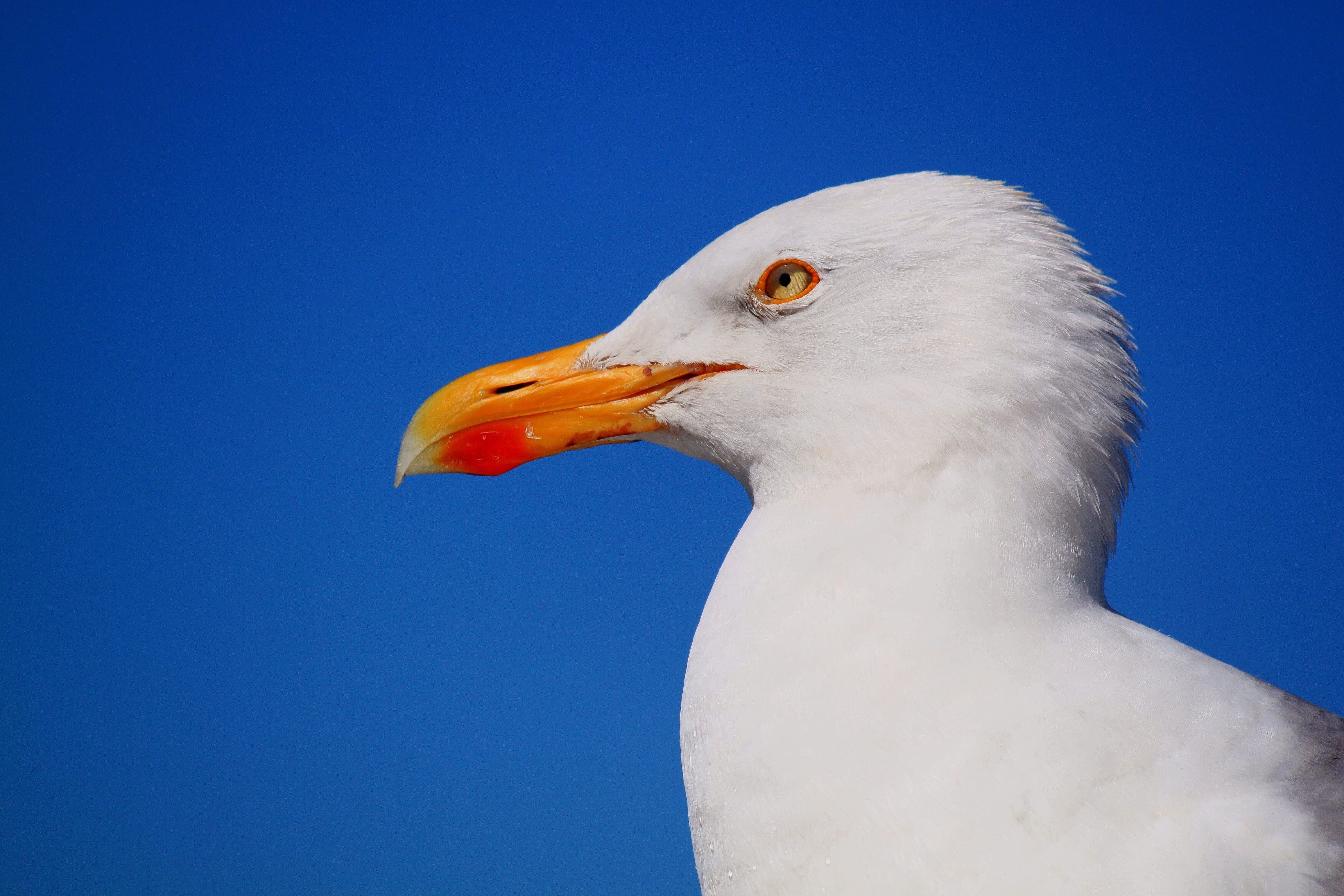 Albatross Bird