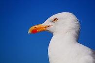 sky, bird, animal